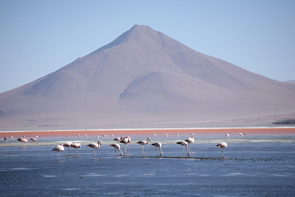 Flamingos no salar do Uyuni