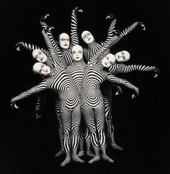 cirque-zebras